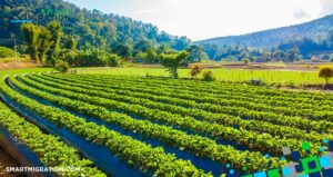 بهترین سرمایه گذاری در استرالیا کشاورزی